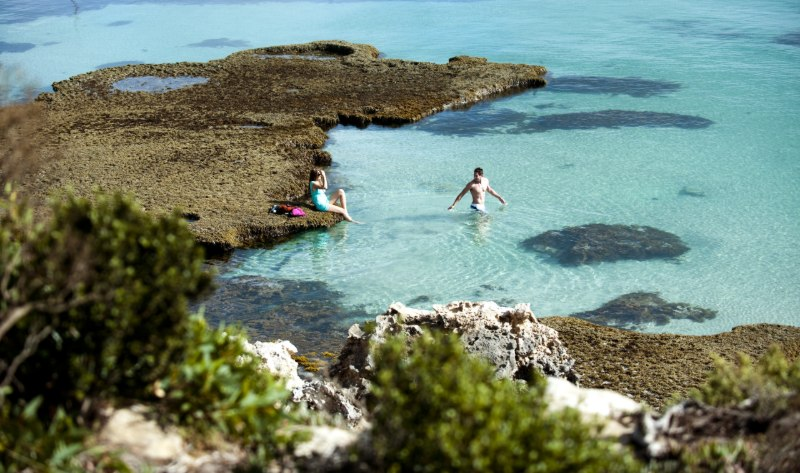 אוסטרליה האי קנגרו