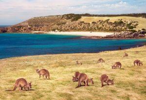 טיול באוסטרליה