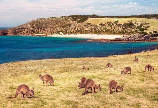 מטיילים עם ילדים באוסטרליה