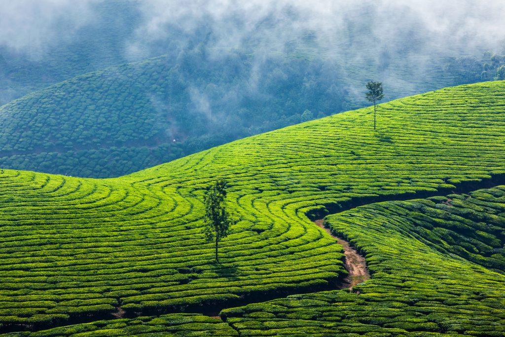 טיול לקרלה בהודו - טיול בהתאמה אישית לויאטנם / להודו